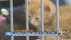 Glendale animal shelter looks for financial help