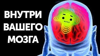 Путешествие внутри человеческого мозга