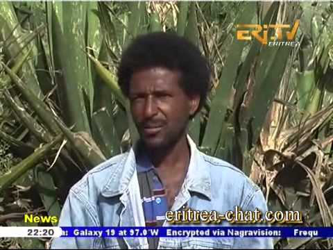 Eritrean English News Senafe Sub Zone Water Conservation Campaign