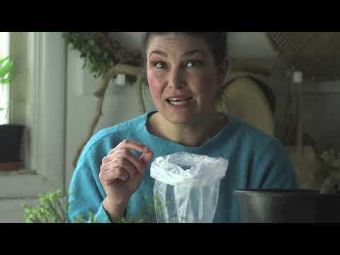 Sötaste tomaten -väljer tomatsorter , skickar sticklingar och spirar frö! Hemma hos Jessica v 10