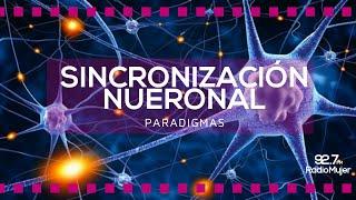 Sincronización Neuronal | Paradigmas