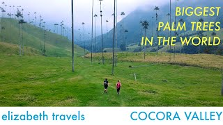 Biggest Palm trees in the world Cocora Valley, Colombia | South America