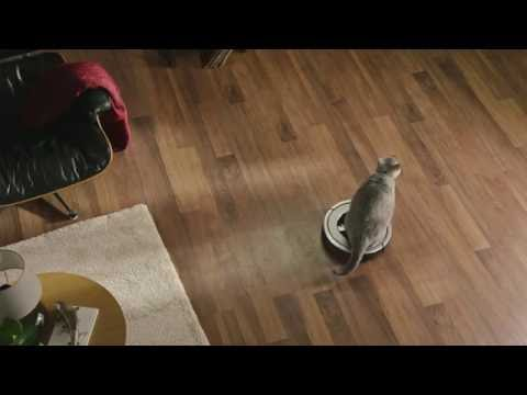 Creative Ways Overweight Pets Get Around the House