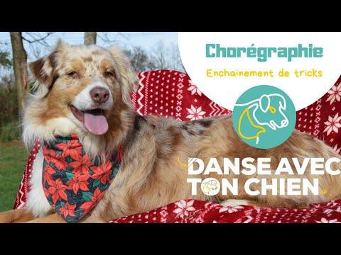 Enchainement de décembre : on le travaille ensemble? #dogdancing