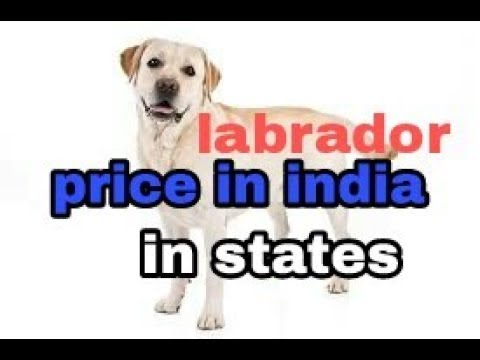 Labrador price in india in states in hindi || dogs biography