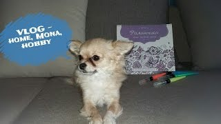 VLOG - собака Мона, кошка Алекса, канцтовары, раскраски-антистресс, орхидеи
