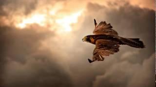 Chicane - Windbreak