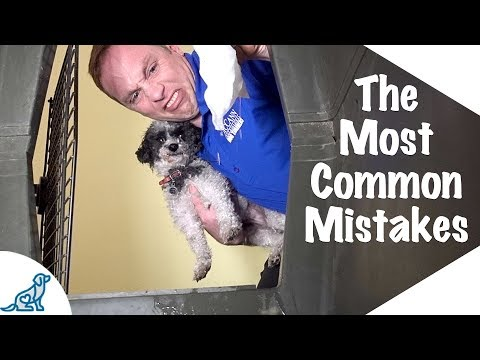 Potty Training A Puppy In A Crate - Crate Training Isn't Working - Professional Dog Training Tips