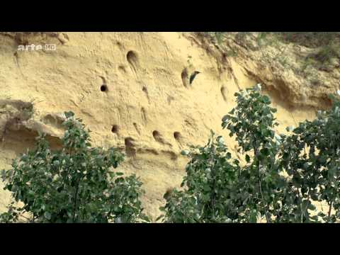 Slovaqui Sauvage 2015 1080p by arte HD