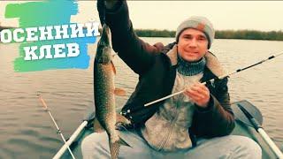 Зловили багато окуня і щук. Кльова рибалка в Новоишимке.