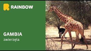 Gambia - zwierzęta