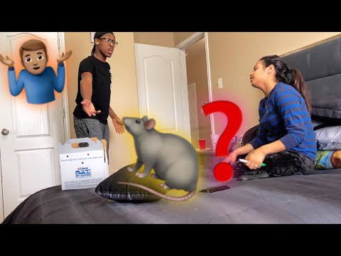 I LOST A HAMSTER IN OUR ROOM !!! PRANK