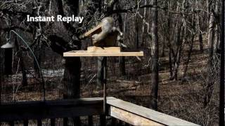 Squirrel Wars - Electric fence bird feeder