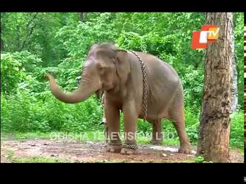 Story of Odisha | Places to Visit in Mayurbhanj | Odisha Tourist Attractions