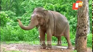 Story of Odisha   Places to Visit in Mayurbhanj   Odisha Tourist Attractions