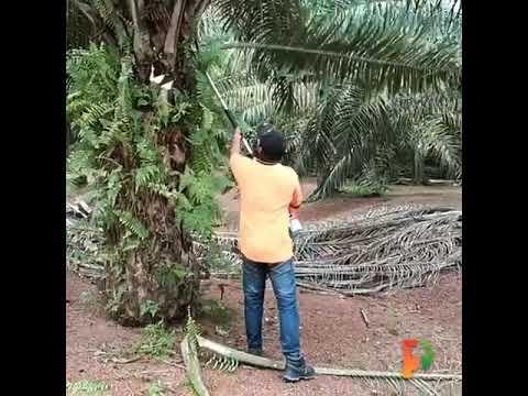 E-Cutter in Palm Oil Operations 油棕榈切割机