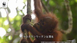 森を守る(動画シリーズ:2分でわかる!世界の自然を守るWWFの活動)