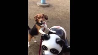 以前は公園のパンダに上手く乗れてたのにな〜体が重くなったかな?