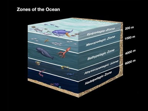 Eps O2 Layer Of The Ocean Zone.