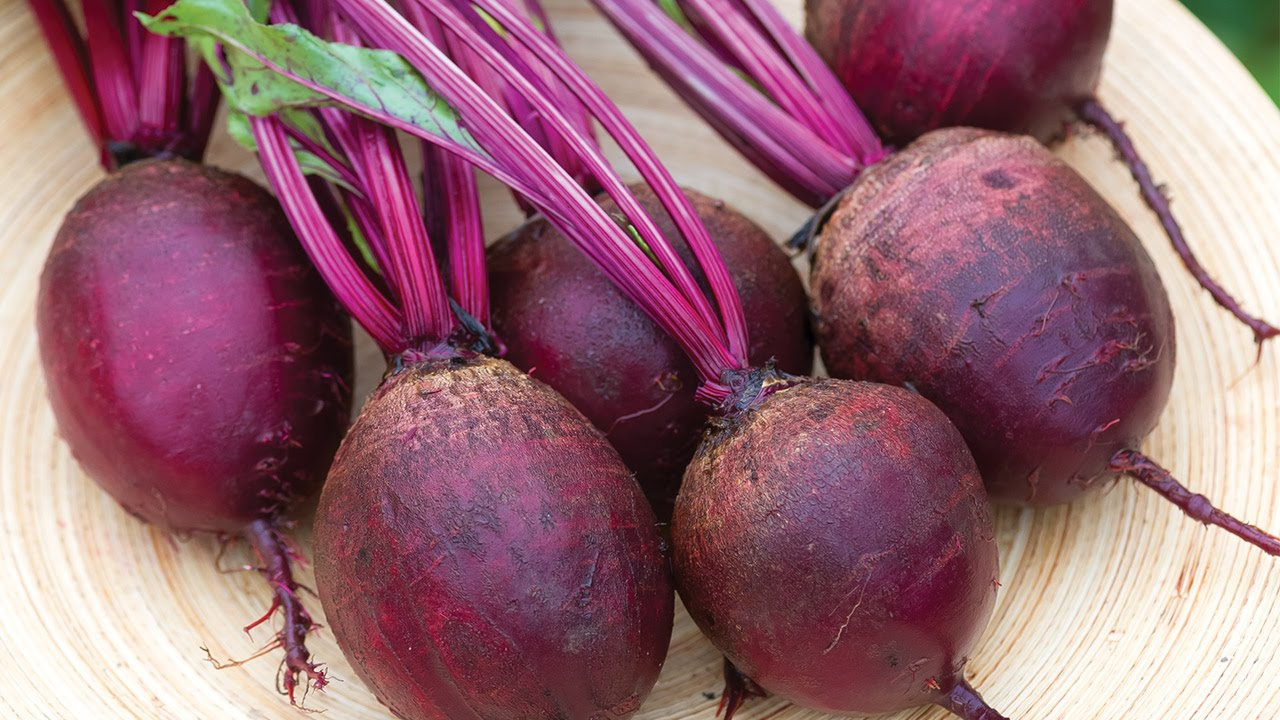 Detroit Dark Red Med Top Beet Seeds and Plants Vegetable