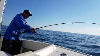 """9'6"""" prototype Black Hole rod in action for striper"""