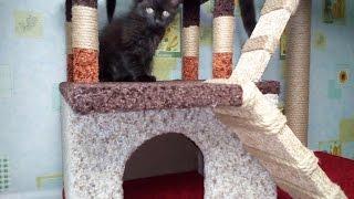 Двухэтажная когтеточка для кота своими руками .