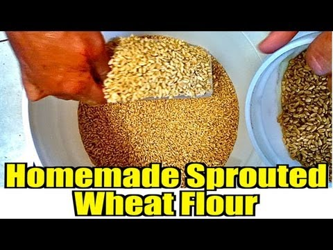 Homemade Sprouted Wheat Flour