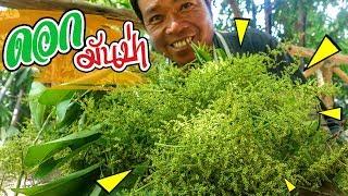 หากินยาก! 1 ปีมีครั้งเดียว ทำอาหารในป่า ดอกมันป่า สูตรครัวป่าไผ่ [ SAN CE ]