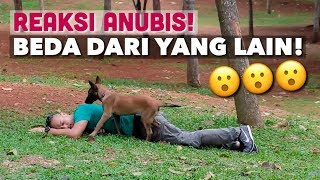 Download Video REAKSI ANUBIS KETIKA PAPAHNYA PURA-PURA PINGSAN! MP3 3GP MP4