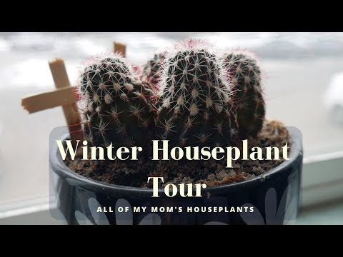 Winter Houseplant Tour | Low Maintenance, Easy To Care For Plants