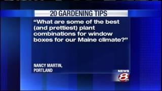 20 Gardening Tips: Window boxes