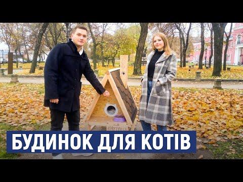Суспільне Кропивницький: У Кропивницькому встановили будинок для бездомних котів