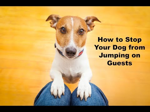 How to Stop Your Dog from Jumping on People and Guests