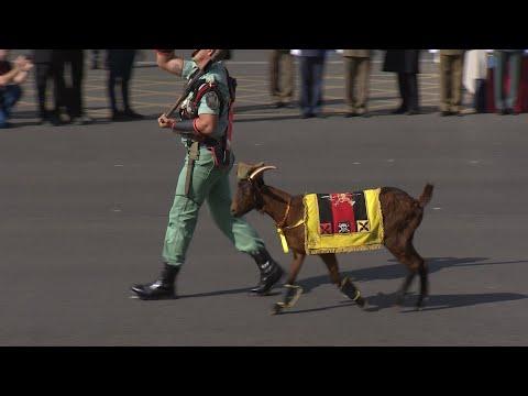 La cabra de la Legión acapara de nuevo todas las miradas