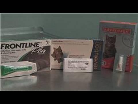 Cat Health : How to Treat Flea Allergies in Cats