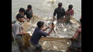Awesome Fishing in my  village  /मेरे गांव में मछली पकड़ने में बहुत अलग है