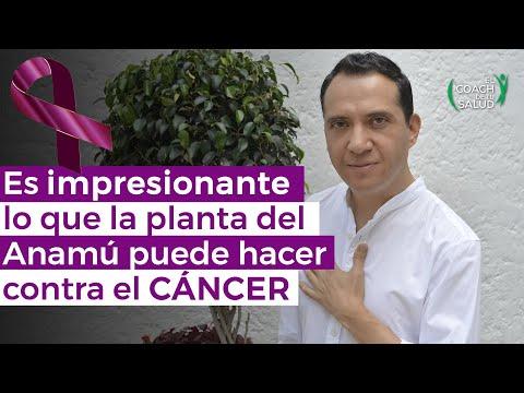 es-impresionante-lo-que-la-planta-del-anamú-puede-hacer-contra-el-cáncer