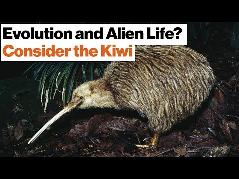 How Alien Life Might Evolve in Outer Space: Dinosaurs, Kiwis, New Zealand | Jonathan Losos