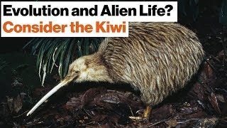 How Alien Life Might Evolve in Outer Space: Dinosaurs, Kiwis, New Zealand   Jonathan Losos