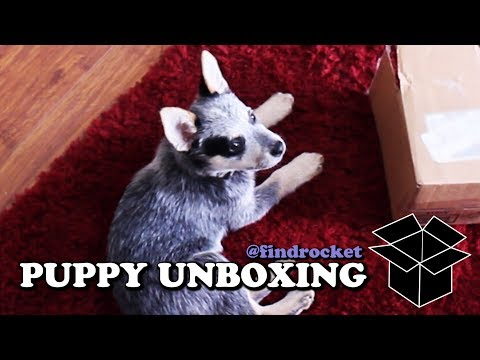 Puppy Unboxing #4 - Bunny