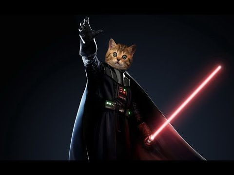 Star Wars Cats  The Imperial March Darth Vaders theme