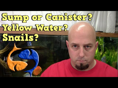 Does Your Aquarium Have Yellow Water Or Snails? KGQandA!