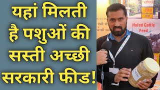 How to Get Cheap & Best feed for Dairy cow Buffalo in india|Hafed Cattle feed Details