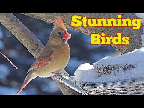 SUPER FUN Videos for Cats and Dogs : 1 Hours of Birds