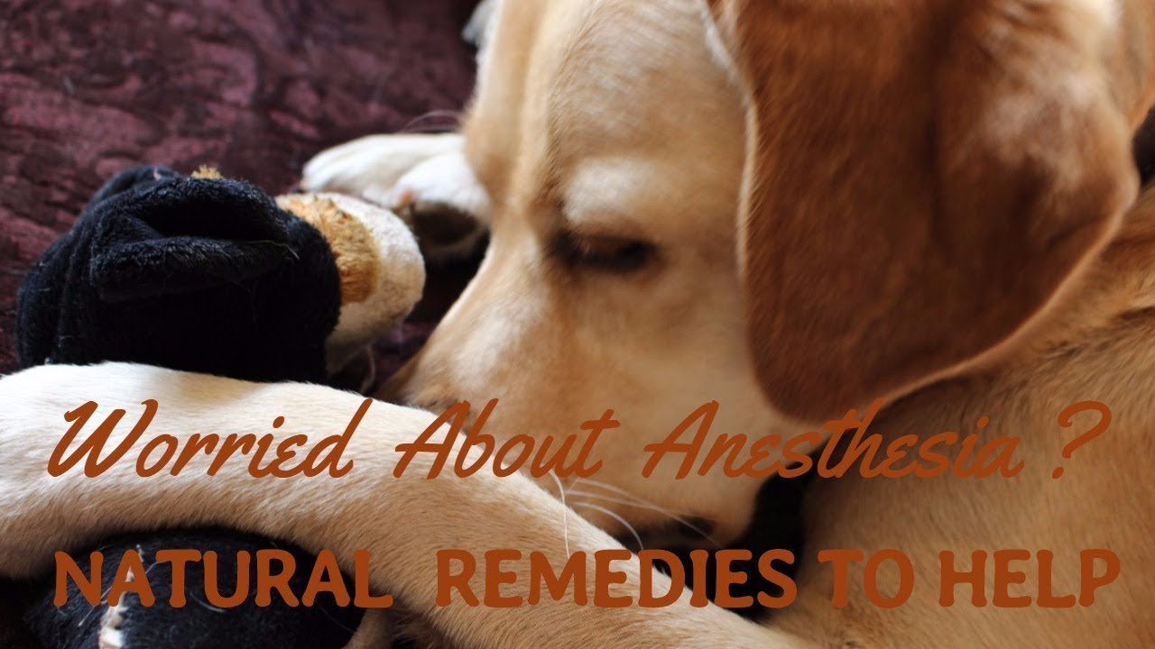Natural Remedies After Anesthetic And Surgery - Youtube-9901