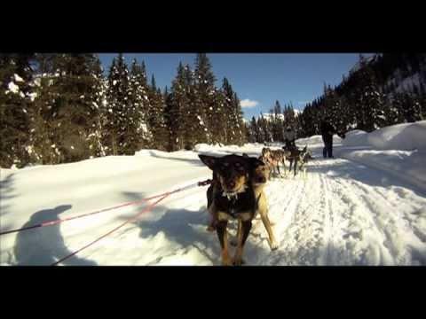 Dog Sledding Jasper Canada