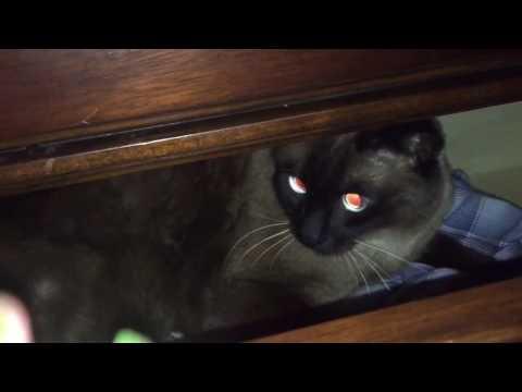 Кошки и котята в дар Собаки и кошки в добрые руки в