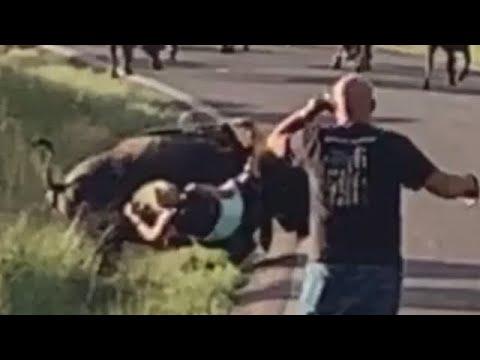 Download Buffalo Attacks Woman Motorcyclist at Custer State Park South Dakota