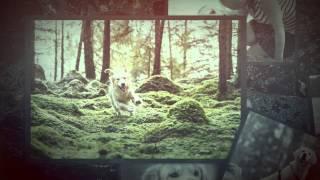 Alvenmod Foto - Golden Retriever Photo Sessions!