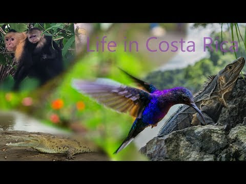 14 Days In Costa Rica  Wild Life  DJI